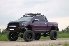Purple Ram