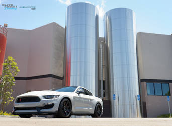2016 Ford GT350R | 2016 Shelby GT350R